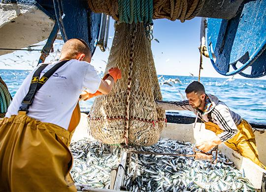 sardine vissers op een visserboot van Conserverie La Perle des Dieux