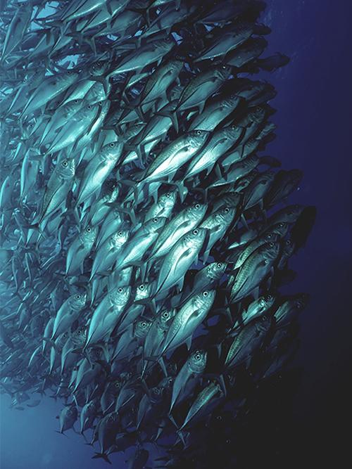 School tonijn