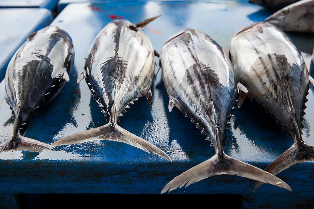 Vers gevangen witte tonijn